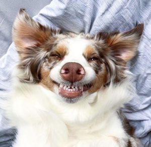 Как сделать зубы вашей собаки снова великолепными