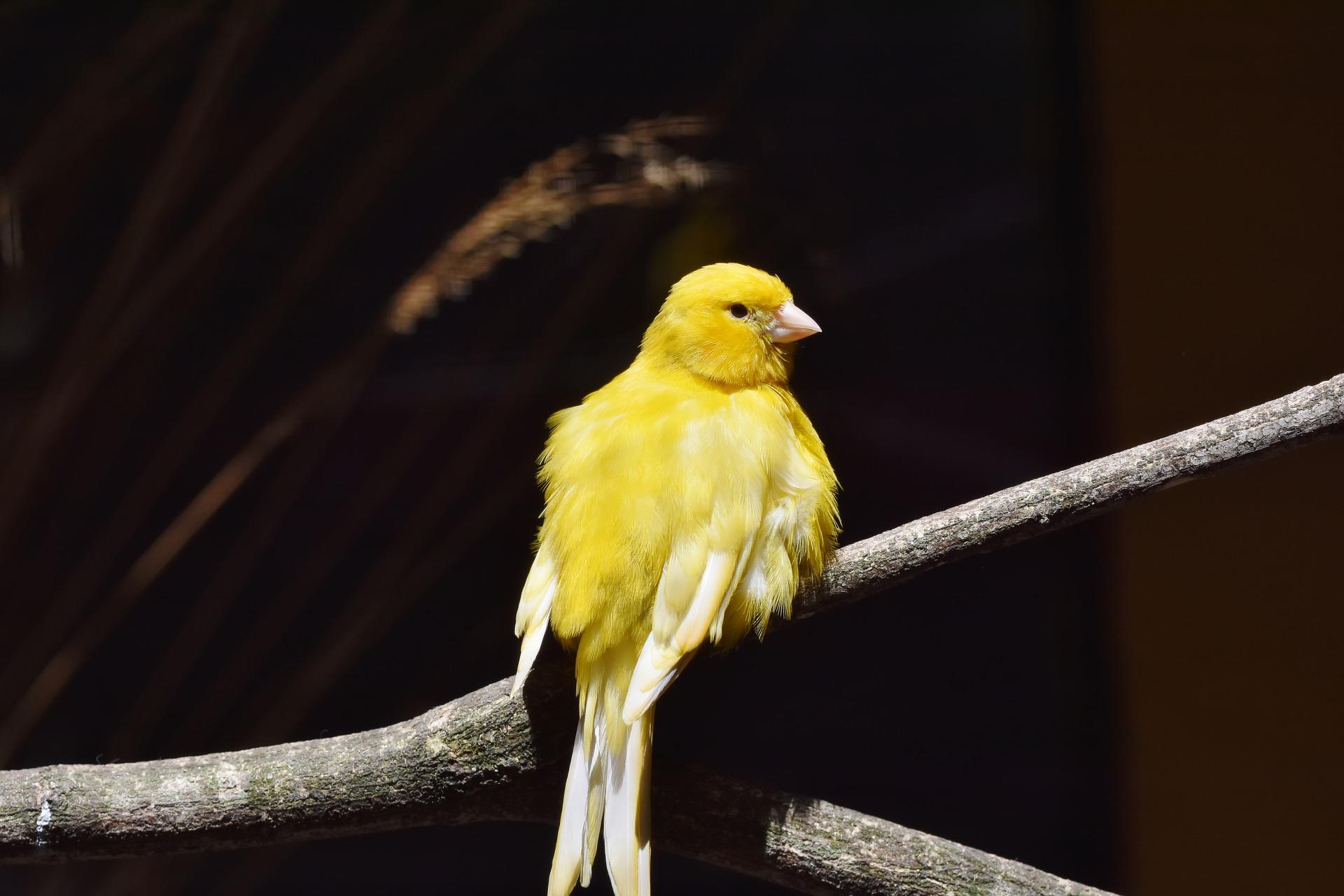 Стресс у птиц