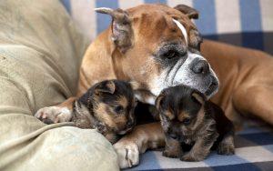 Как победить запах от кошек и собак.